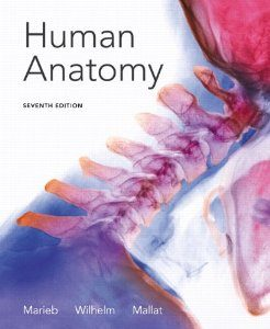 Test Bank for Seeleys Anatomy and Physiology, 10th Edition : VanPutte
